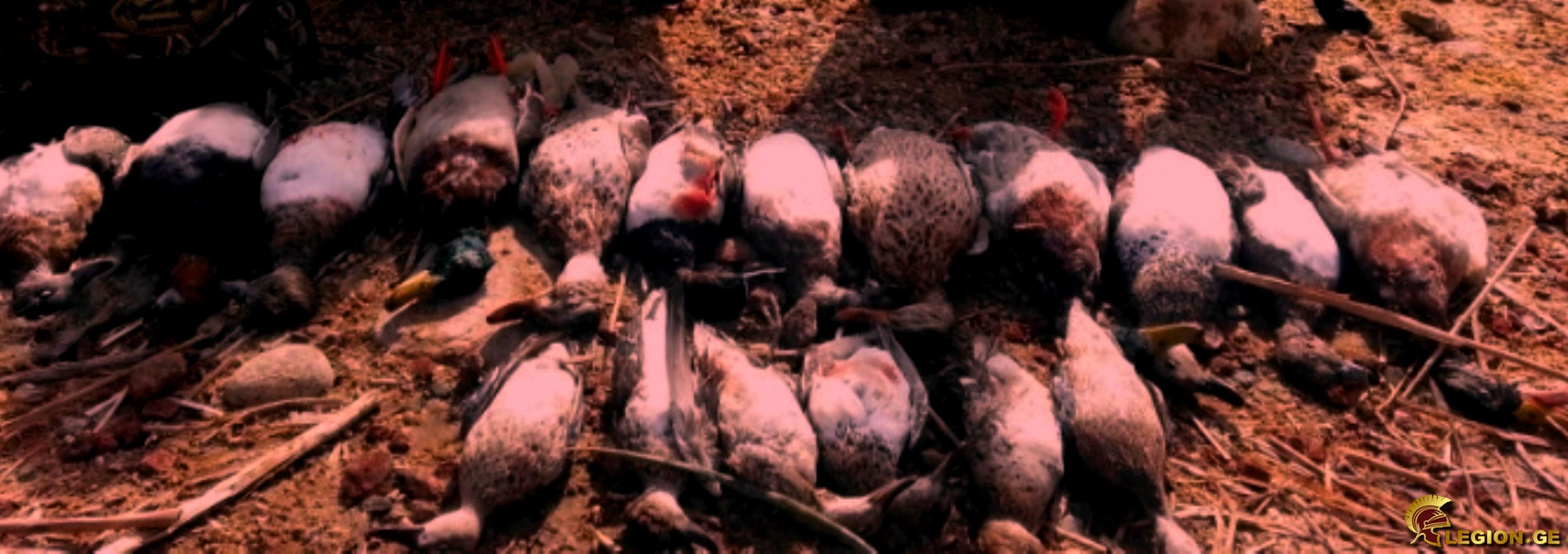 pre_1461689703__colorado-duck-hunting-wa