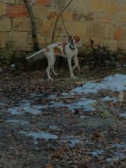 buko's Photo